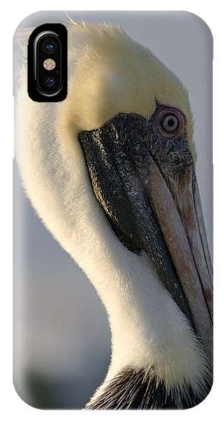 Brown Pelican Profile IPhone Case