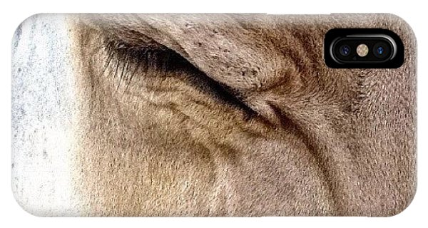 Ohio iPhone Case - Brown Swiss Cow by Natasha Marco