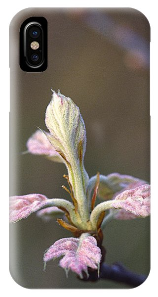 Budding Oak Leaves IPhone Case