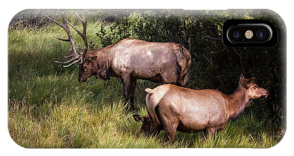 Bull Elk 7x7 IPhone Case