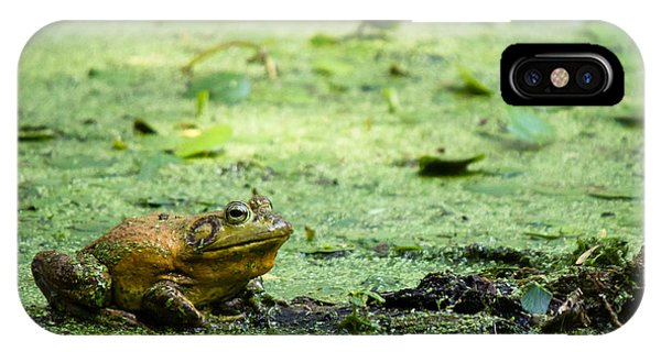 Bull Frog IPhone Case