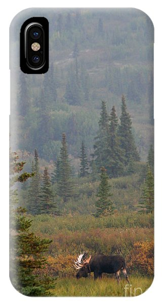 Bull Moose In Alaska IPhone Case