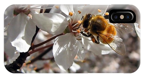 Bumble Bee On A Cherry Blossom IPhone Case