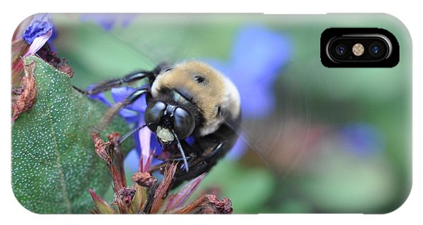 Bumblebee In Plumbago Larpentae IPhone Case