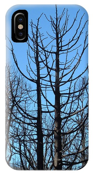 Death Valley iPhone Case - Burned Trees 2 by Naxart Studio