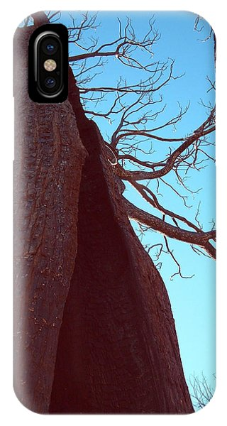 Death Valley iPhone Case - Burned Trees 6 by Naxart Studio