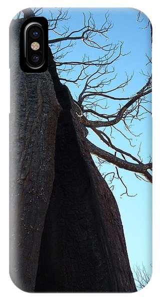 Death Valley iPhone Case - Burned Trees 7 by Naxart Studio