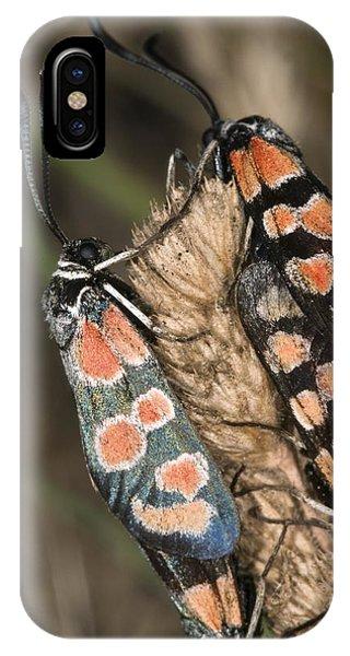 Burnet Moths Mating Phone Case by Paul Harcourt Davies
