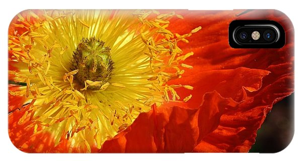 Bursting Peony IPhone Case