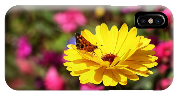 Butterfly Kissing Yellow Wildflower  IPhone Case