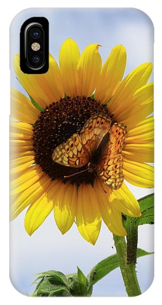 Butterfly On A Sunflower IPhone Case