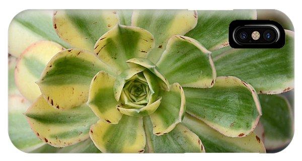 Cactus 63 IPhone Case