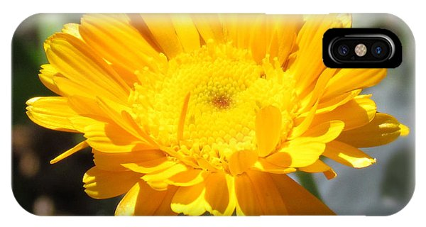 Calendula Blossom IPhone Case