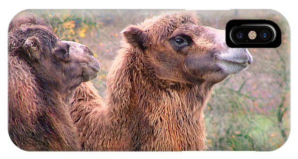 Calm Camels IPhone Case