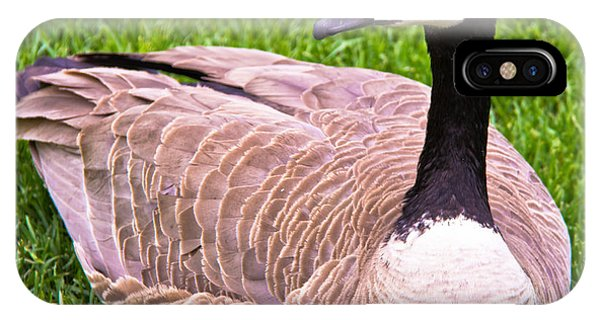 Canadian Goose IPhone Case