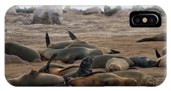 Cape Cross Seal Colony IPhone Case