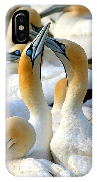 Cape Gannet Courtship IPhone Case
