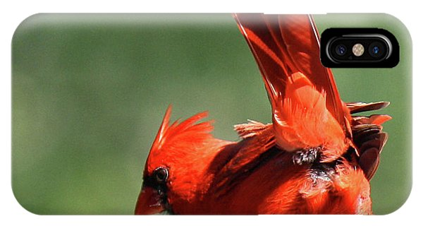 Cardinal-a Picture Is Worth A Thousand Words IPhone Case