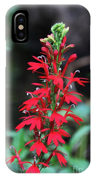 Cardinal Flower IPhone Case