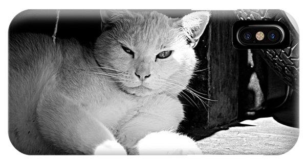 White Cat IPhone Case