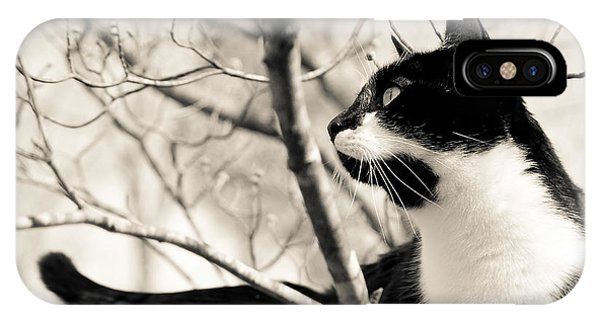Cat In A Tree In Black And White IPhone Case