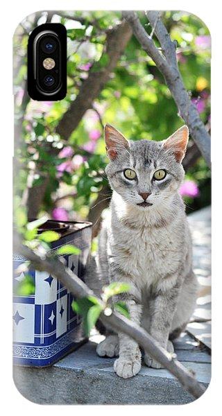 Cat Of Mykonos IPhone Case