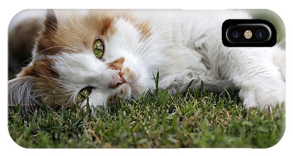 Cat On The Grass IPhone Case