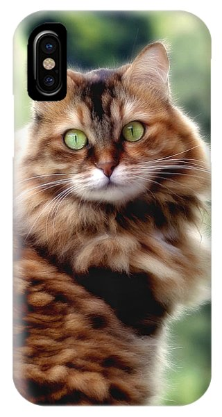 Cat Portrait IPhone Case