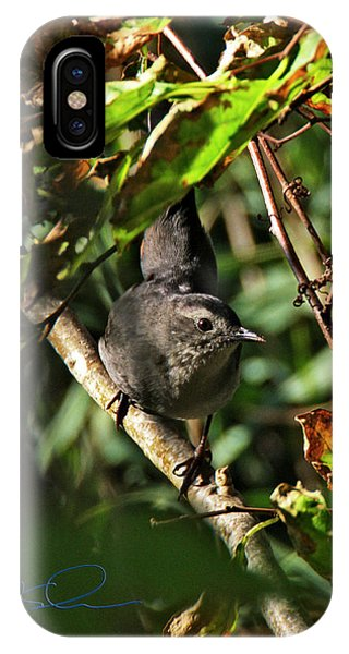 Catbird IPhone Case