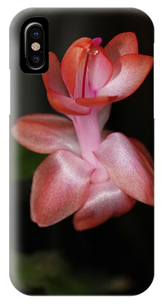 Catcus Flower IPhone Case