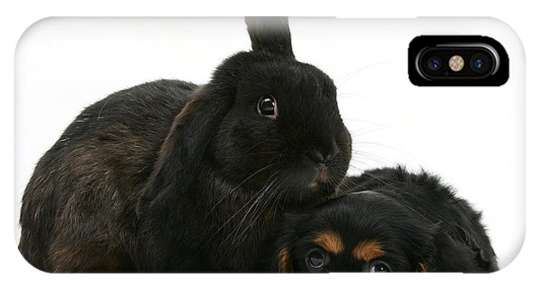 King Charles iPhone Case - Cavalier King Charles Spaniel And Rabbit by Mark Taylor