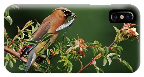 Cedar Waxwing With A Bug IPhone Case