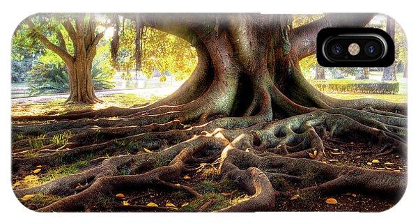 Centenarian Tree IPhone Case