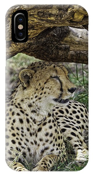 Cheetah Resting IPhone Case