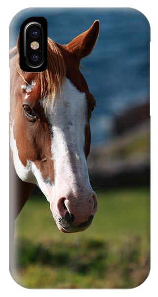 Chestnut Mare  IPhone Case