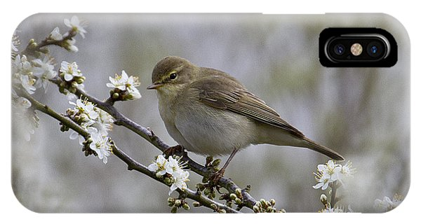 Chiff Chaff On Blackthorn Blossom IPhone Case