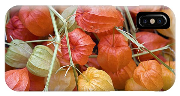 Chinese Lantern Flowers IPhone Case