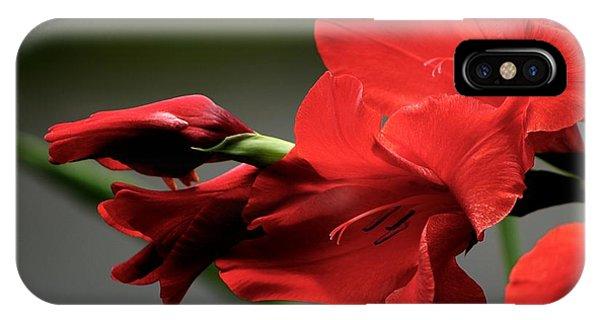 Chromatic Gladiola IPhone Case