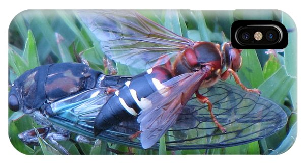 Cicada Killer IPhone Case