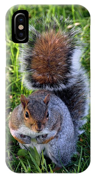 City Squirrel IPhone Case