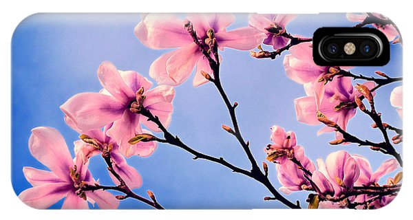 Cherry Blossums IPhone Case