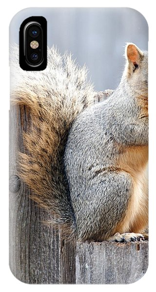 Checking If The Yard Clear For Dinner IPhone Case