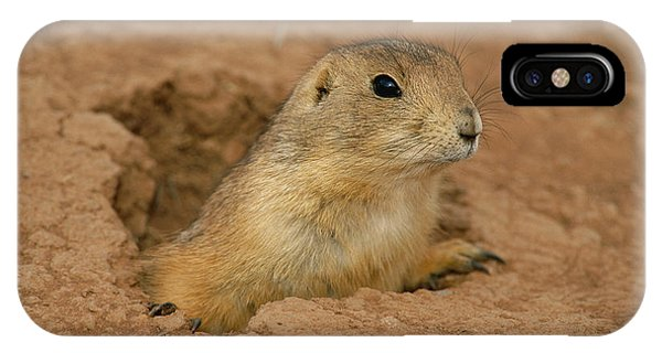 North Dakota Badlands iPhone Case - Close View Of A Prairie Dog Emerging by Annie Griffiths
