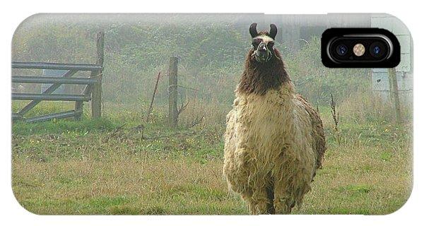 Coast Llama IPhone Case