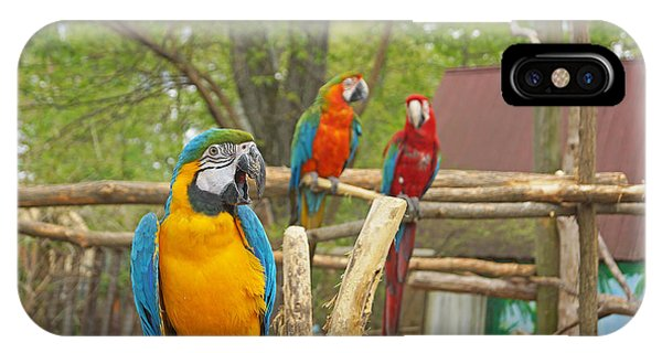 Color Of Parrots  IPhone Case