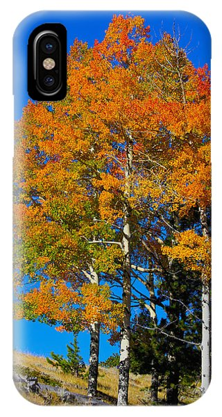 Colorado Aspens IPhone Case