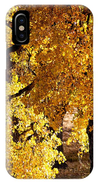 Colorado Gold IPhone Case