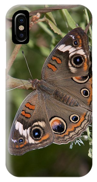 Common Buckeye Butterfly Din182 IPhone Case