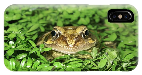 Common Frog Phone Case by Cordelia Molloy