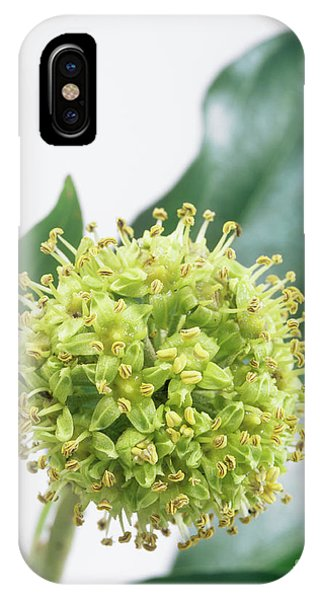 Common Ivy (hedera Helix) Flower Head Phone Case by Sheila Terry